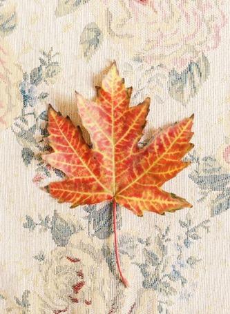 Осеннее счастье, или немного листьев в холодной воде